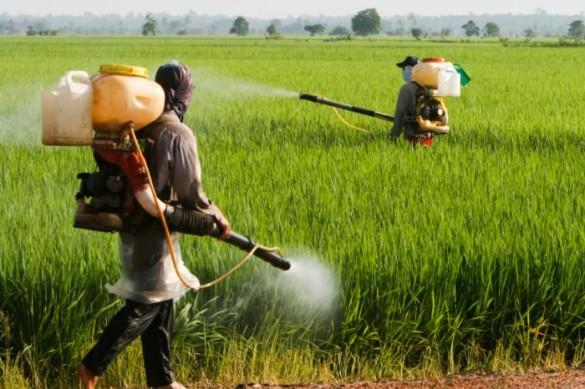 Agro chemicals in Nizamabad